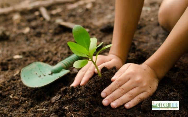 Child planting a garden as one of the simple homeschool gardening ideas.