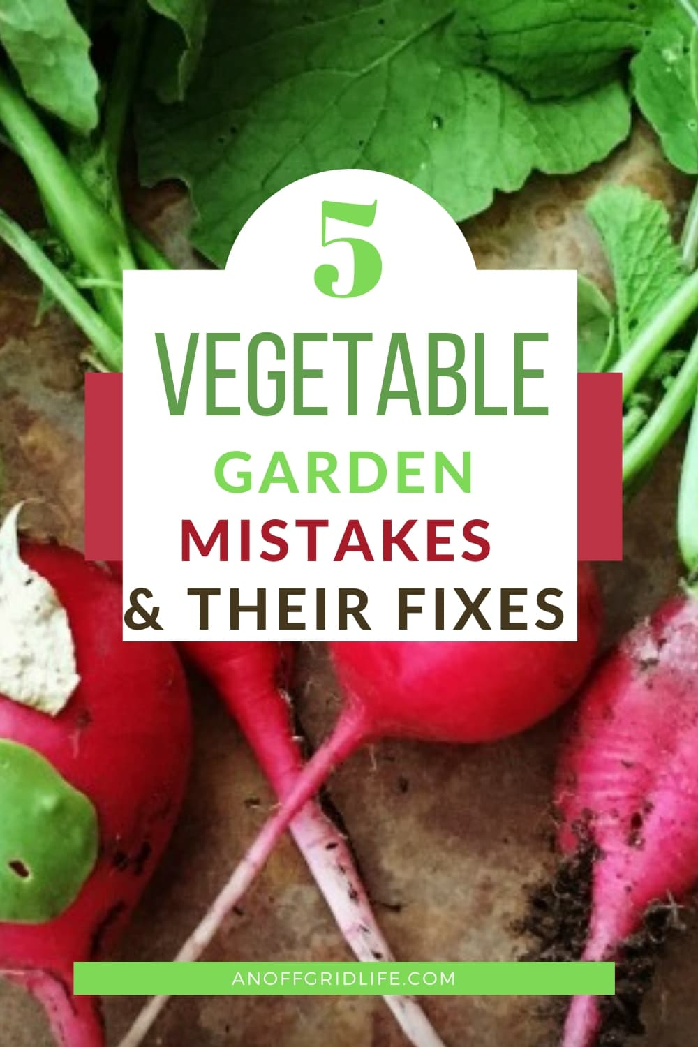 5 vegetable garden mistakes and their fixes text overlay on fresh radishes