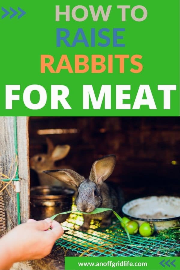 How to raise rabbits for meat - rabbits in hutch outdoors with screen and door