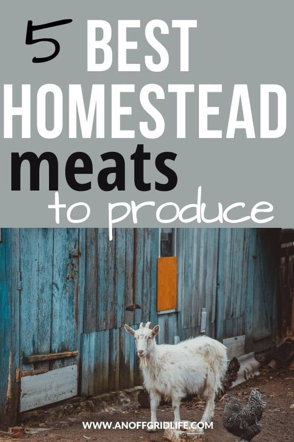 5 Best Homestead Meats to Produce text overlay on image of goat and chickens in a run with a painted blue wooden wall.