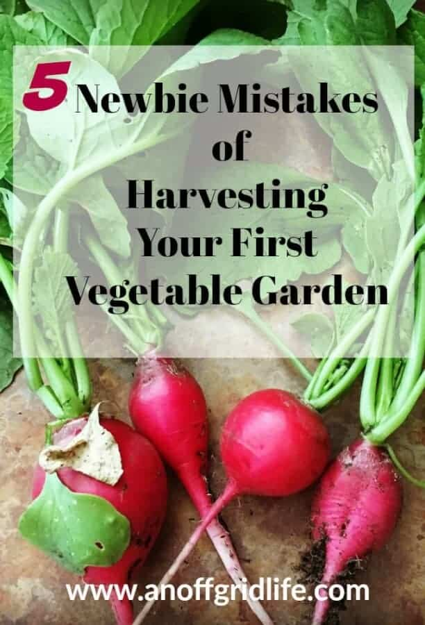 5 Vegetable Gardening Harvesting Mistakes Newbies Make
