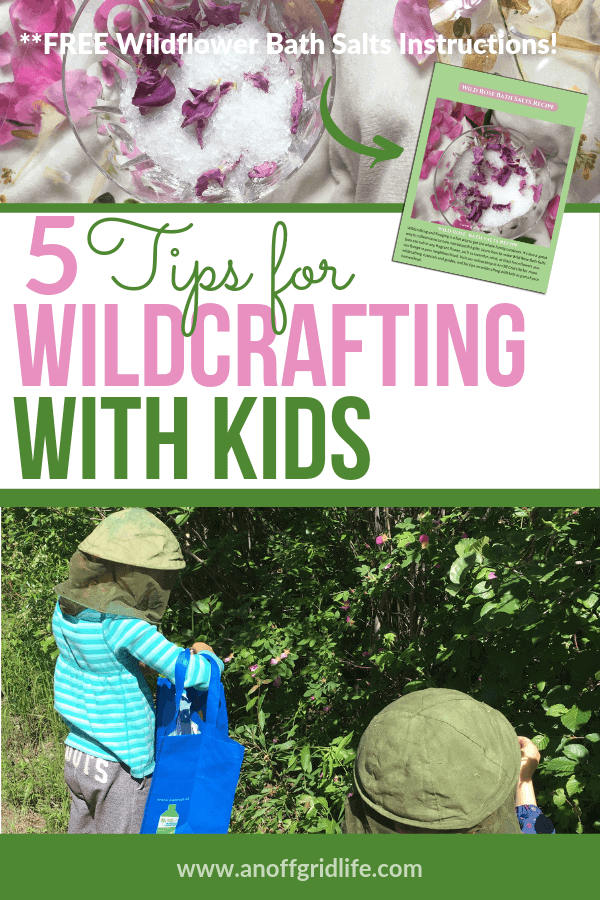 5 Tips for Wildcrafting With Kids #wildcrafting #foraging #homeschooling #herbs