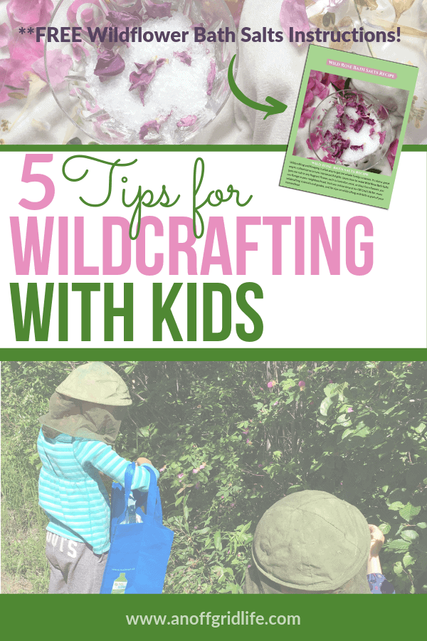 Wildcrafting with kids - tips and a free downloadable instruction pack to make a simple wild rose bath salts recipe.