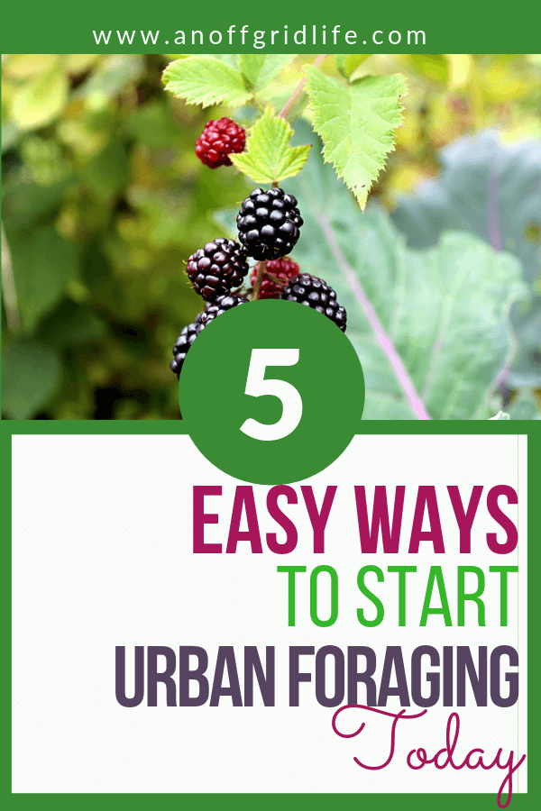 5 Easy Ways to Start Urban Foraging Today #urbanforaging #foraging