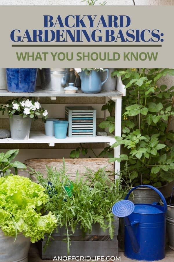 "a pinterest image of a backyard garden with potted plants on a shelf against a stone wall. Text overlay ""backyard gardening basics: what you should know"""