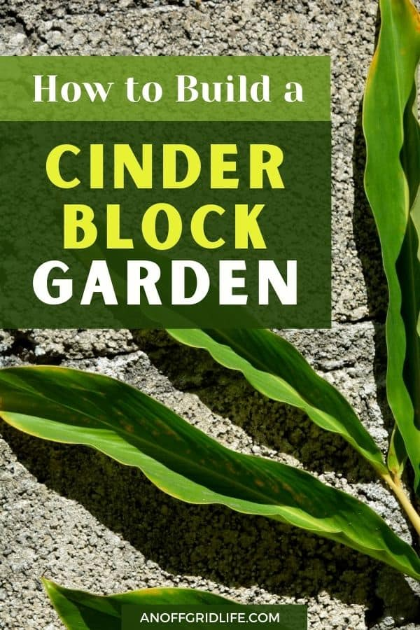 "a pinterest image of a leaf on a concrete wall with text overlay ""how to build a cinder block garden"""