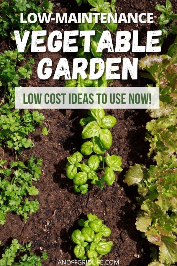 """text overlay """"low maintenance vegetable garden: low cost ideas to use now"""" over a picture of basil and other green plants in a vegetable garden."""
