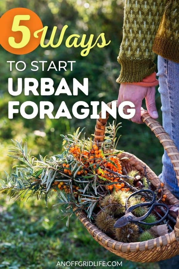 """a pinterest image of a person carrying a wicker basket with foraged plants. Text overlay """"5 ways to start urban foraging"""""""