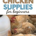 """Wondering what backyard chicken supplies are """"must-haves"""" when you're starting your first flock? These things made our life easier!"""