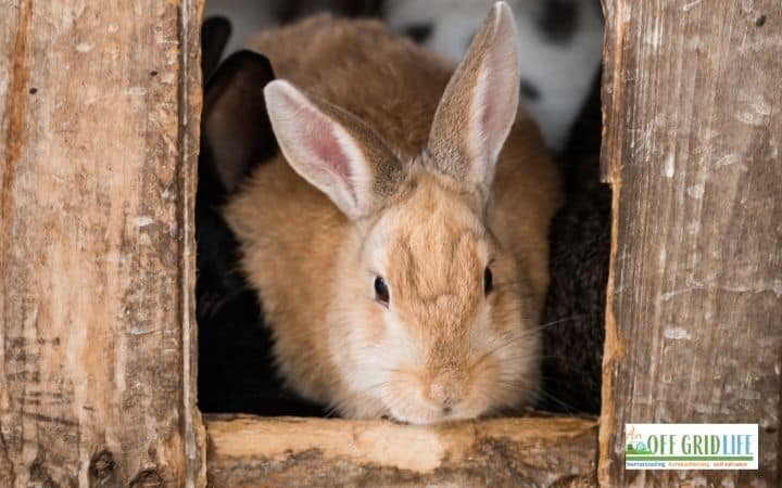 a picture of a rabbit leaving a small wooden hutch