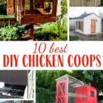 The 10 best DIY chicken coops posts for inspiration, designs, plans, and tips when you are planning your own backyard chicken coop. Man building a chicken coop
