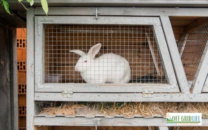 a white rabbit in a white wooden hutch