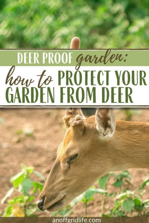 Deer Proof Garden text overlay on image of a deer nibbling on seedlings