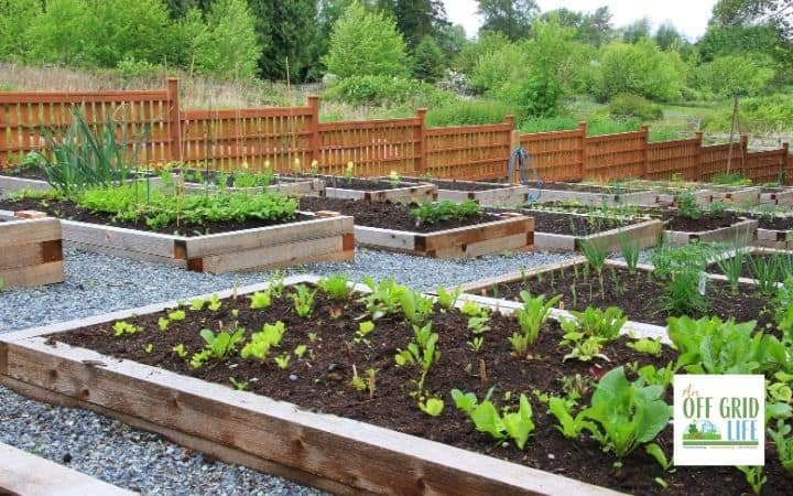 a picture of raised garden beds with wooden frames and a wooden fence in the country.