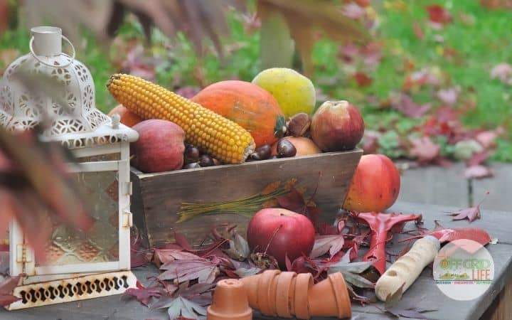 Wooden box on wooden table outdoors with corn, onions, squash, and other fall vegetables