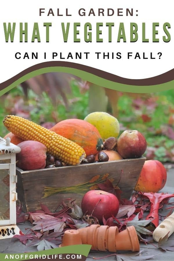 Fall Garden: What Vegetables to Plant This Fall text overlay on winter vegetables in wooden basket outdoors.