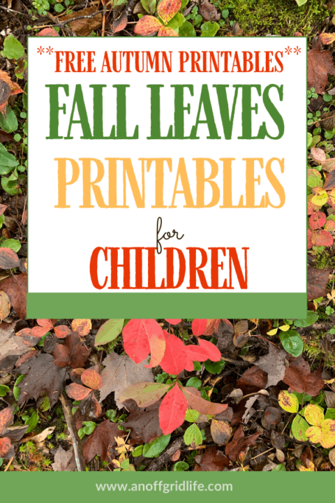Fall Leaves Printables for Children - free download