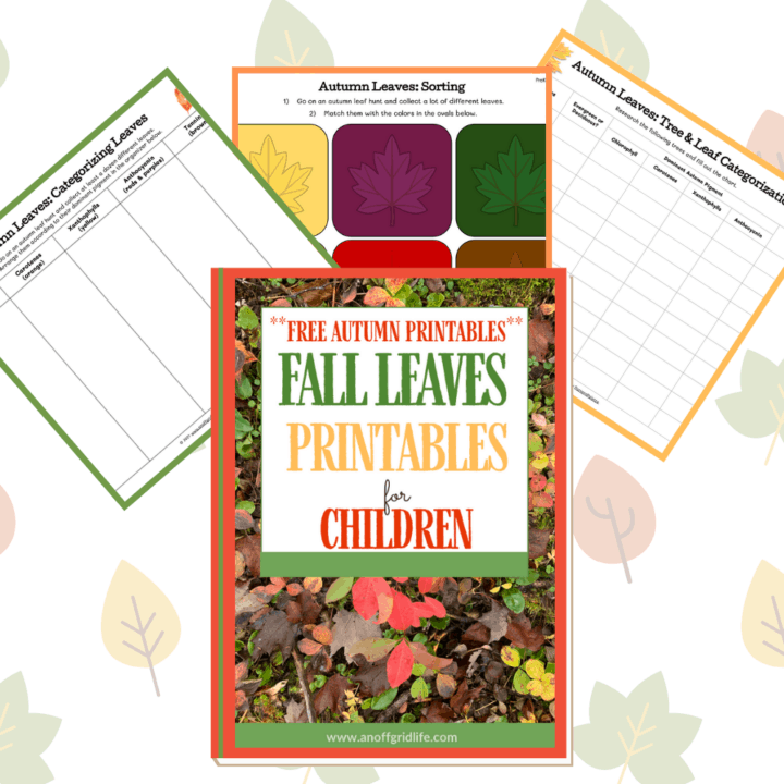 Looking for fall leaves printables and facts about leaves? Grab this free activity pack and unit study resources in your homeschool today!
