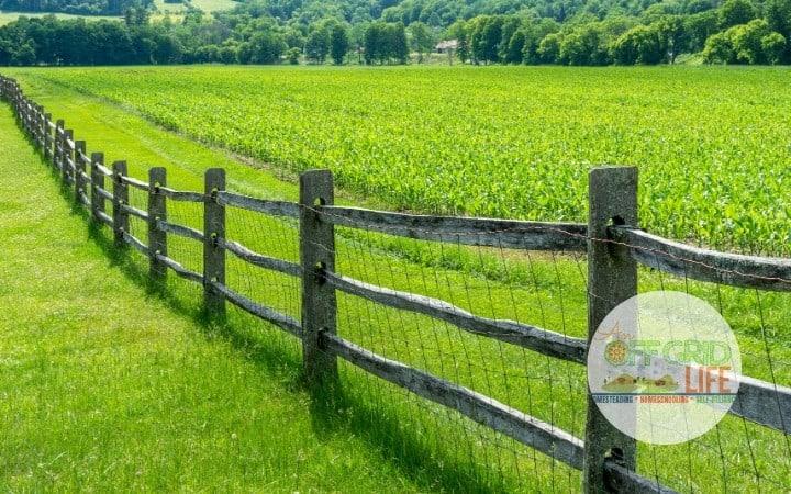 Split rail fence in grassy field