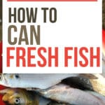 How to Can Fresh Fish text overlay on fresh fish in a red bowl