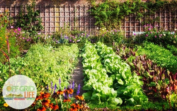 A well-planned vegetable garden.
