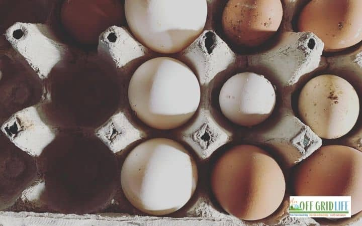 Farm fresh eggs in a carton with plaid placemat behind