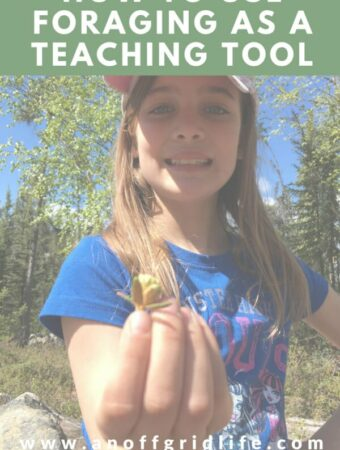 How to Use Foraging To Teach #foragingtoteach #foragingwithkids #offgridhomeschooling