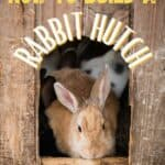 """a pinterest image of a brown rabbit leaving a hutch, text overlay """"tips for how to build a rabbit hutch"""""""