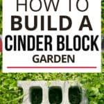 How to build a cinder block garden text overlay on image of cinder block on grass