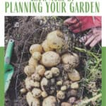 Freshly dug potatoes in a wire basket in the garden outdoors - text overlay is Gardening Goals: Grow More by Planning your Garden