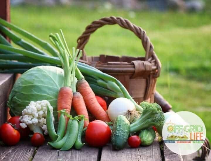 Carrots, cabbage, tomatoes, broccoli and a basket on wooden deck outdoors.