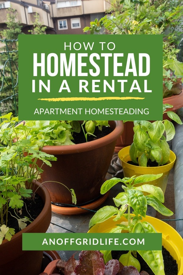Apartment homesteading: homesteading in a rental text overlay on image of vegetables and herbs growing in a container on an apartment balcony