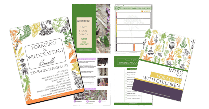 Intro to Foraging & Wildcrafting Bundle for Children