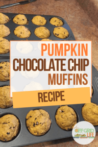 Two dozen pumpkin muffins in baking pans cooling on a countertop.