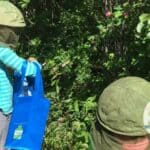 Children foraging wild roses